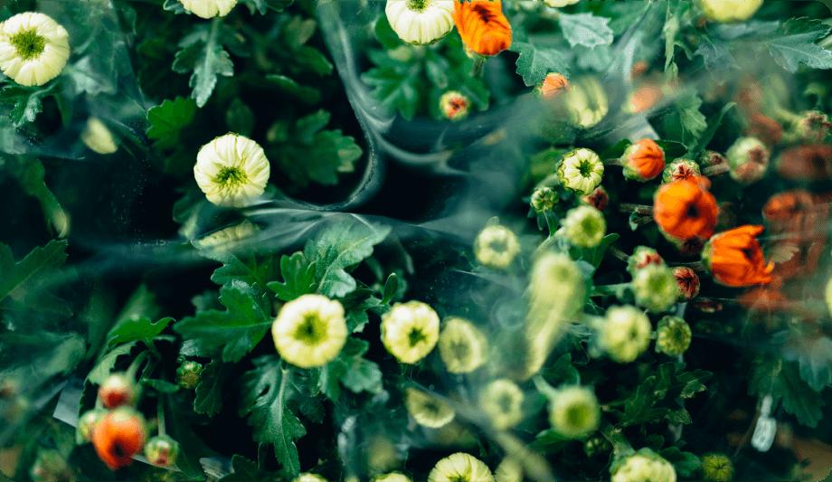 季節の花や苗
